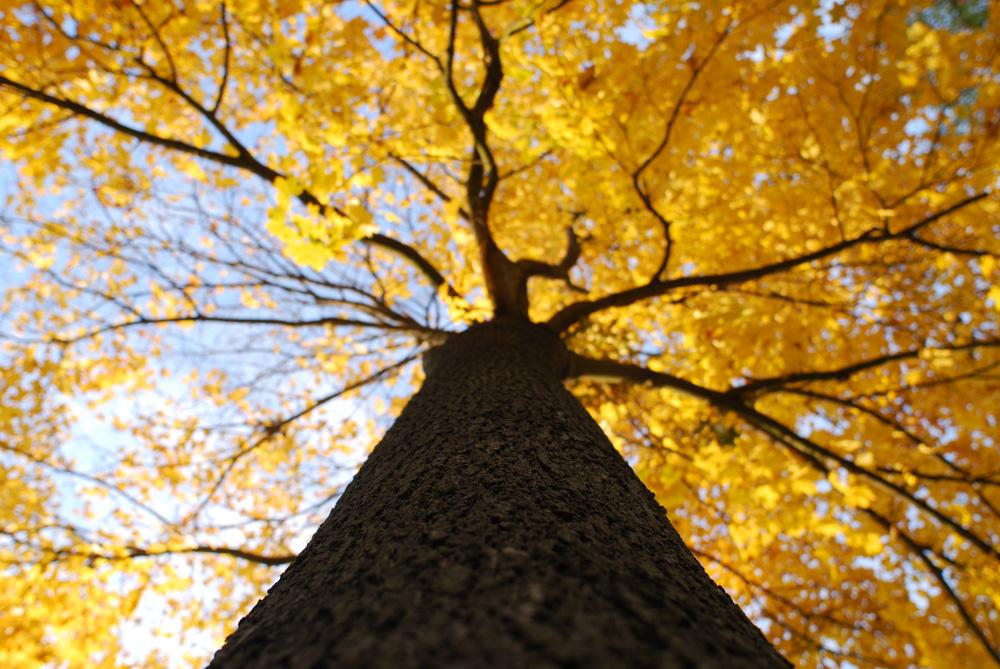 Der Blick hoch in die Baumkrone