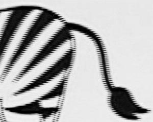 Beispielbild Interlaced Streifen