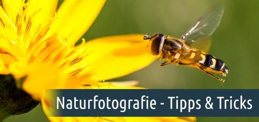 Naturfotografie - Tipps und Tricks Foto: Franz Lechner
