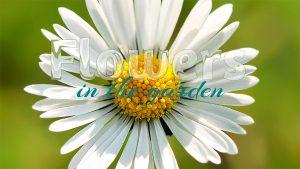 glasschrift-flowers