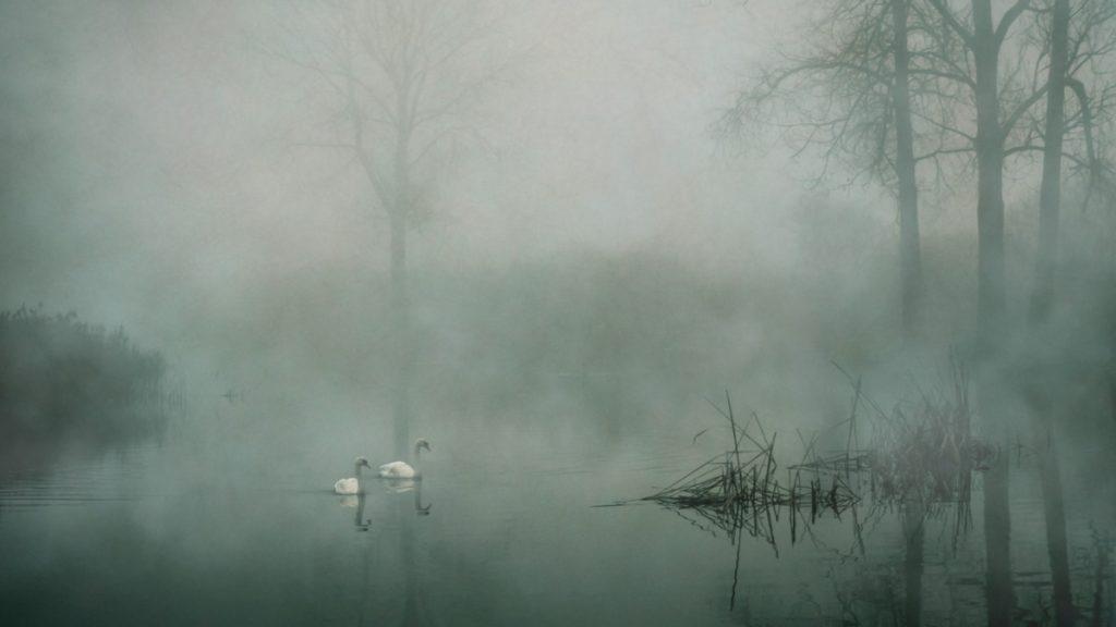 Nebel-Effekt animieren: Nebel und Weichzeichner-Effekt