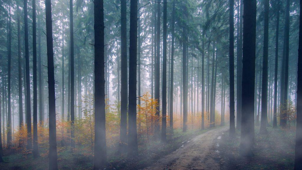 Nebel-Effekt animieren: Aufsteigender Nebel im Wald